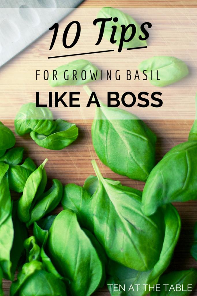 Basil-Tips-1-683x1024